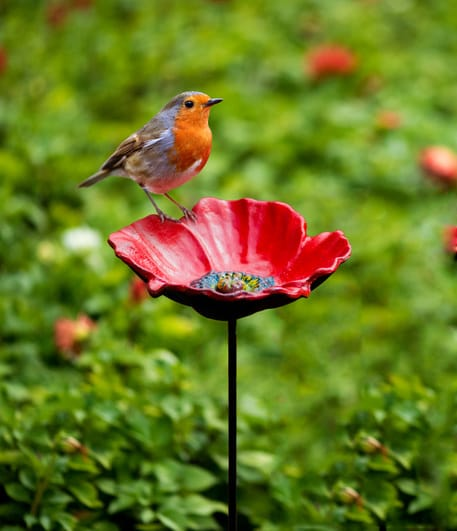 Poppy bird feeder Picture