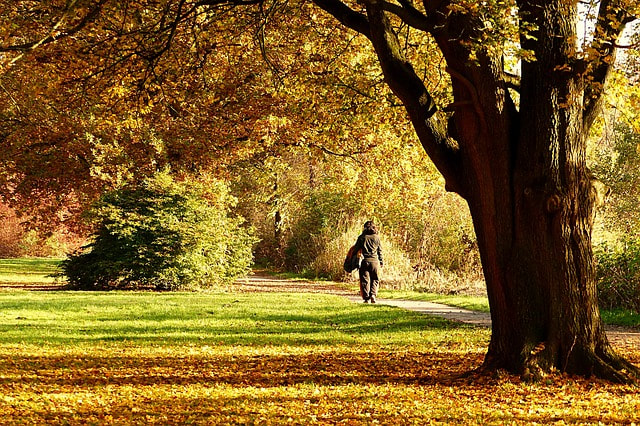 Picture of woman walking on an autumn day